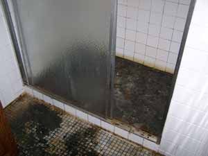 shower stall sewage back up